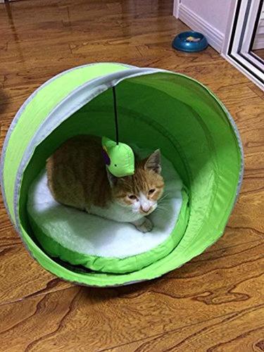 gato cama mascota gato