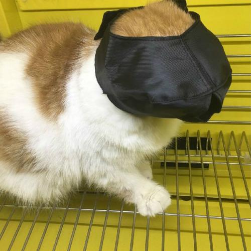 gato creativo ajustable negro venda bozal suministros para m