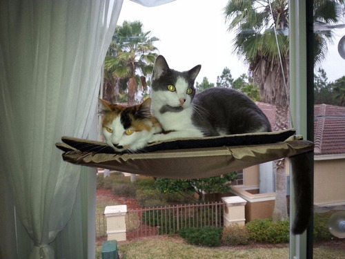 gato mascota cama