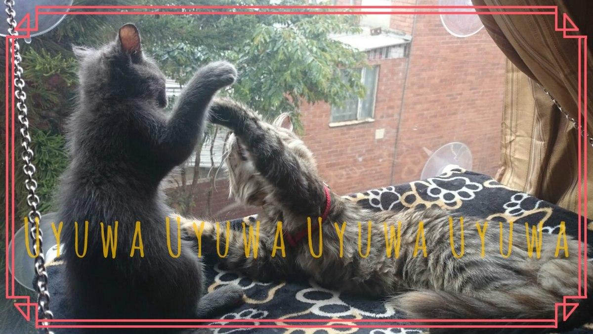 Cama Para Gato Silla Colgante Ventana Mascota Gatos