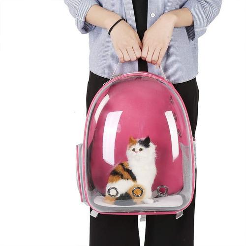 gato viaje transportadora mascota