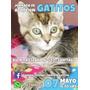 Gatitos Buscan Hogar (adopcion Gratuita)
