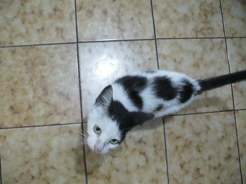 gatos en adopcion