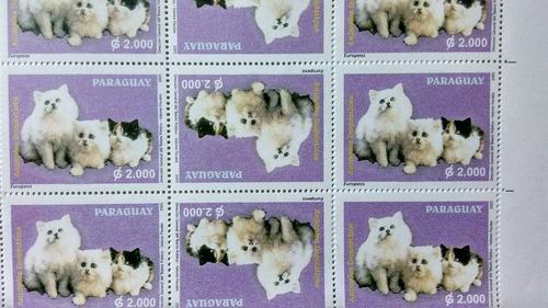 gatos felinos raridade variedade par invertido nnn
