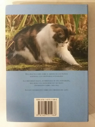 gatos - historia, descripcion , fotografias