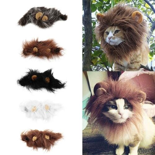 gatos mascotas para