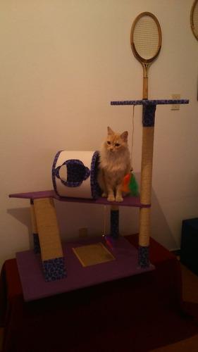 gatos. ras rascador