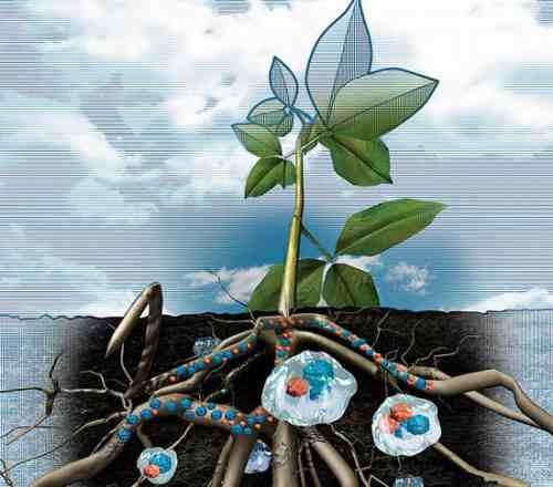 cb4152499 Gel Absorvente Hidríco Para Plantas - Hidrosorve K2 - 50g - R$ 30,00 ...