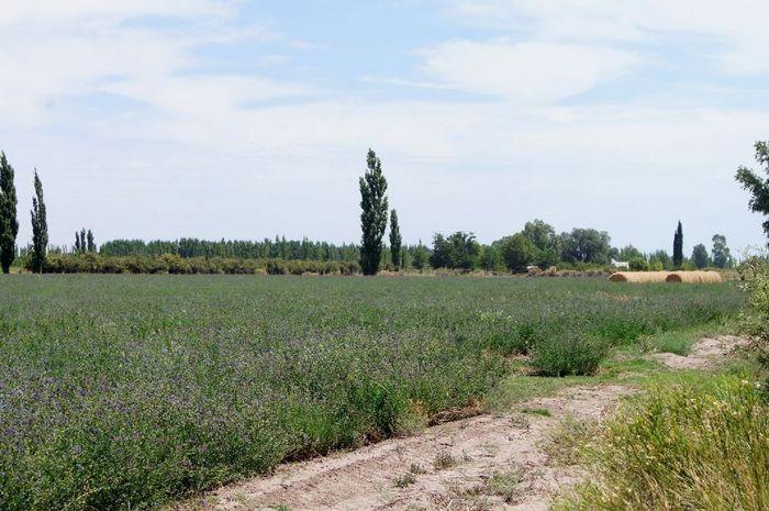 general alvear, mendoza, granjitas 5 has financiadas 10 años