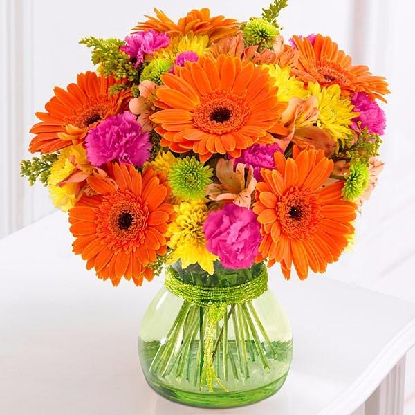 gerbera mix flor gerberas flores sementes para mudas r 16 99 em