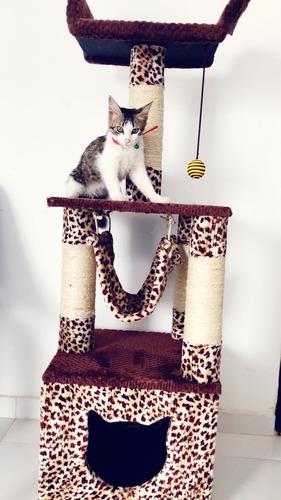 gimnasios rascador para gato + juguete