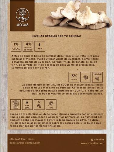 gírgolas, pleurotus, hongos gourmet, micelio semilla