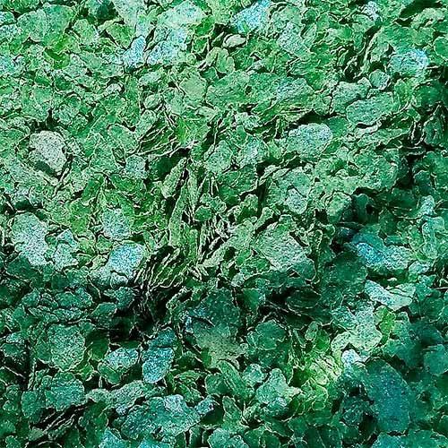 glitter biodegradável ecológico 1g -  pura bioglitter verde