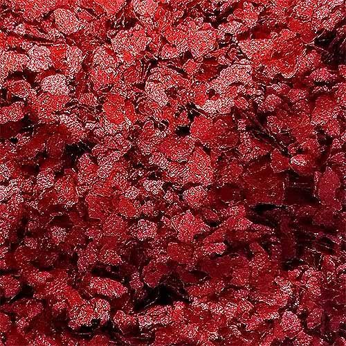 glitter natural e biodegradável 1g -   bioglitter vermelho