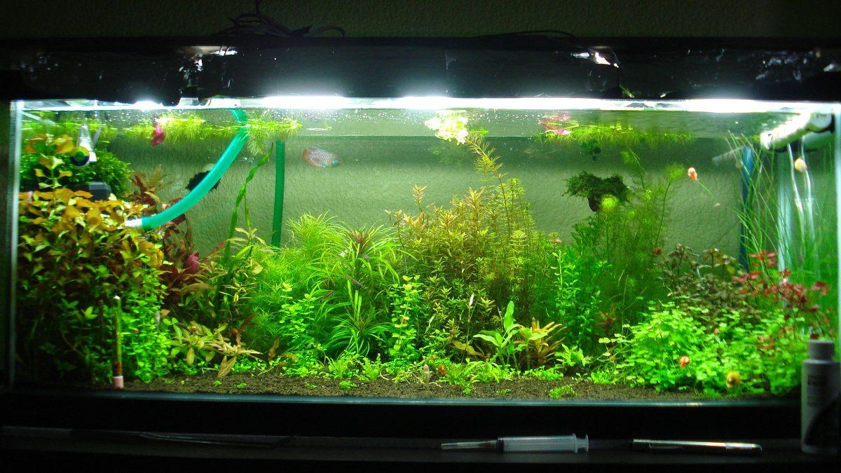 Glutaraldehido galon acuario gafidex acuarios con for Todo para acuarios