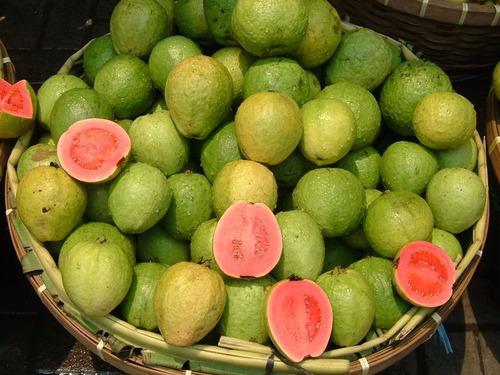 goiaba vermelha graúda para vasos sementes fruta para mudas