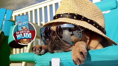 golosinas helado dr.zoo crema 50gr snacks verano 10 unidades