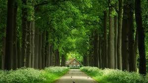 gosta de natureza? esse paraíso te espera 018