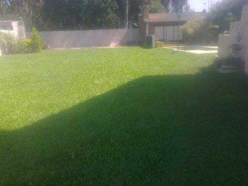 grama bahiana en panes