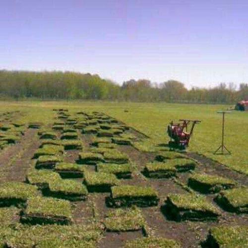 grama bahiana ,parques y jardines