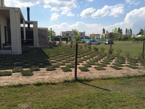 grama bahiana venta y colocación