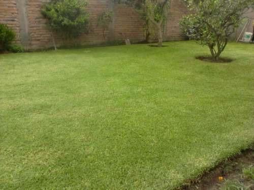 gramas dominicanas, la mejor grama natural del país