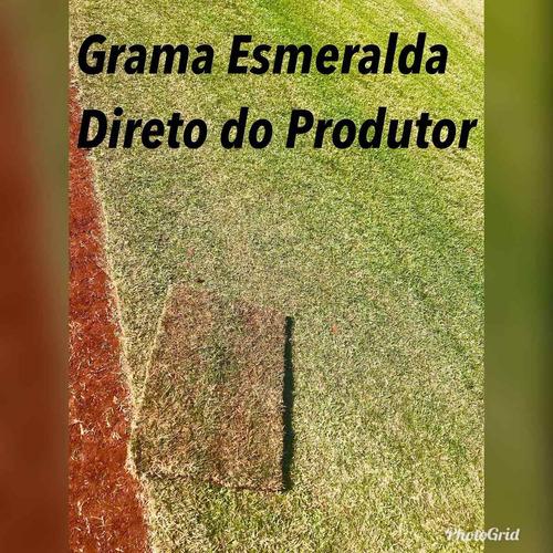 gramas e plantio - grama esmeralda, são carlos e mais
