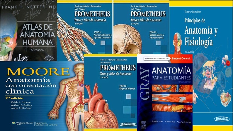 Gran Combo Libros Anatomia Mejores 5 Libros Full Color Pdf - $ 9.999 ...