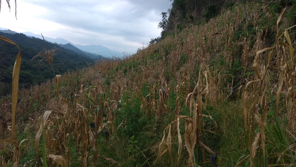 gran promocion: terreno de montaña. 26 hectareas de terreno.
