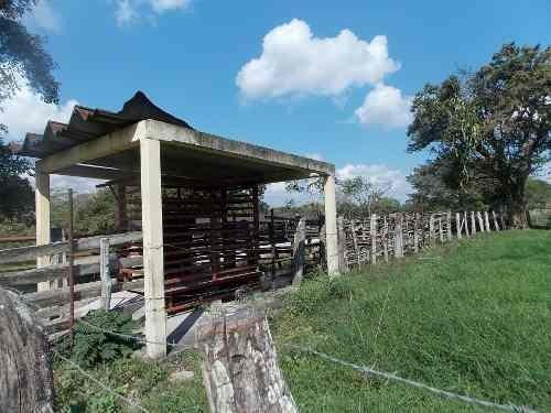 gran rancho ganadero a 15 minutos de veracruz, en jamapa.