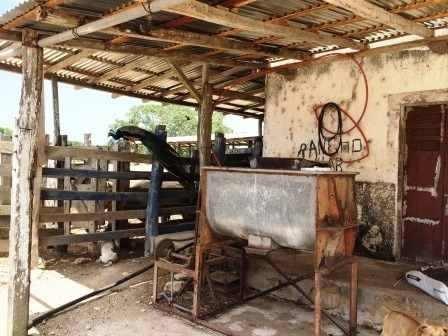 gran rancho ganadero en yucatán, méxico.