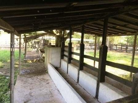 gran rancho ganadero y eco-turístico en yucatán, méxico.
