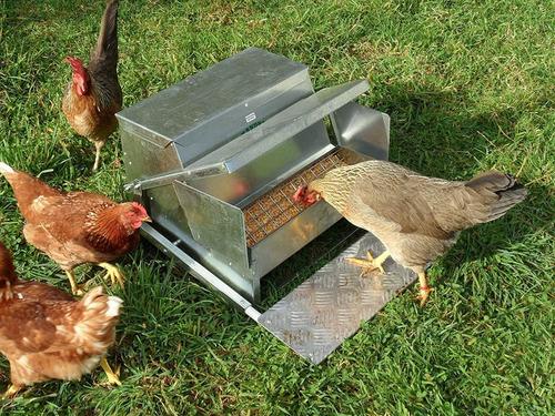 grandpas alimentador alimentador automático para pollo, está