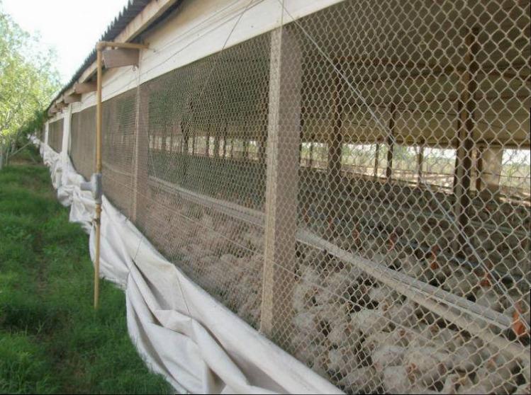 granja avicola funcionando - produccion de pollos parrilleros