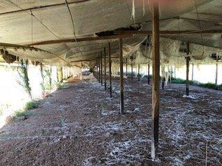 granja avicola habilitada para pollos parrilleros y gallinas