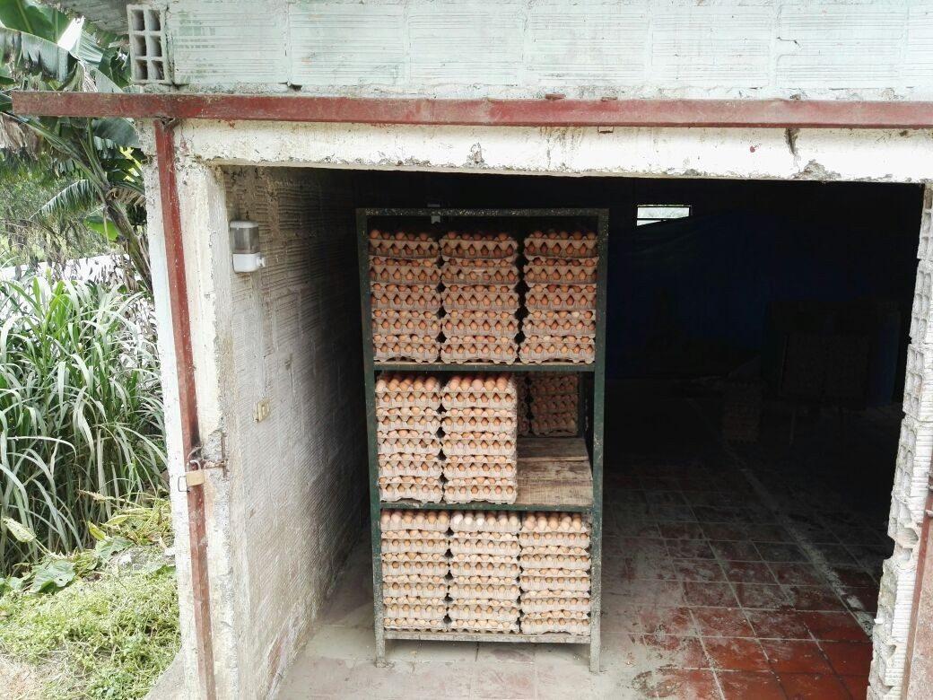 granja avicola y porcicola