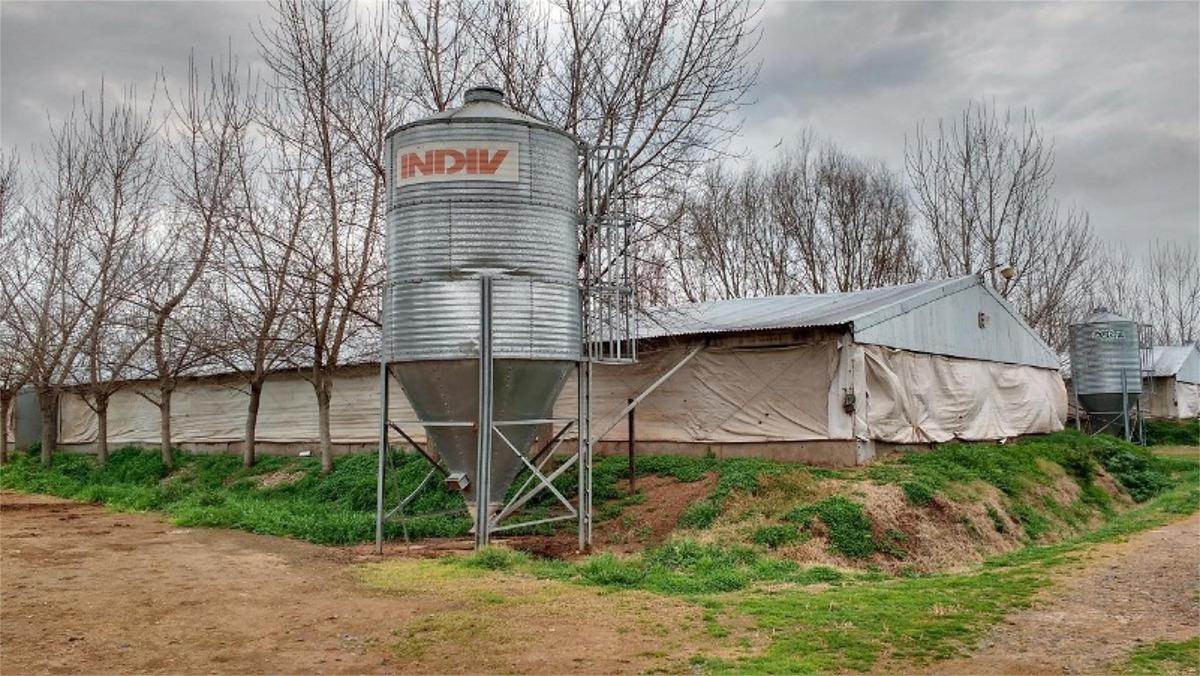 granja para 90.000 pollos, habilitada, a mts de ruta 8