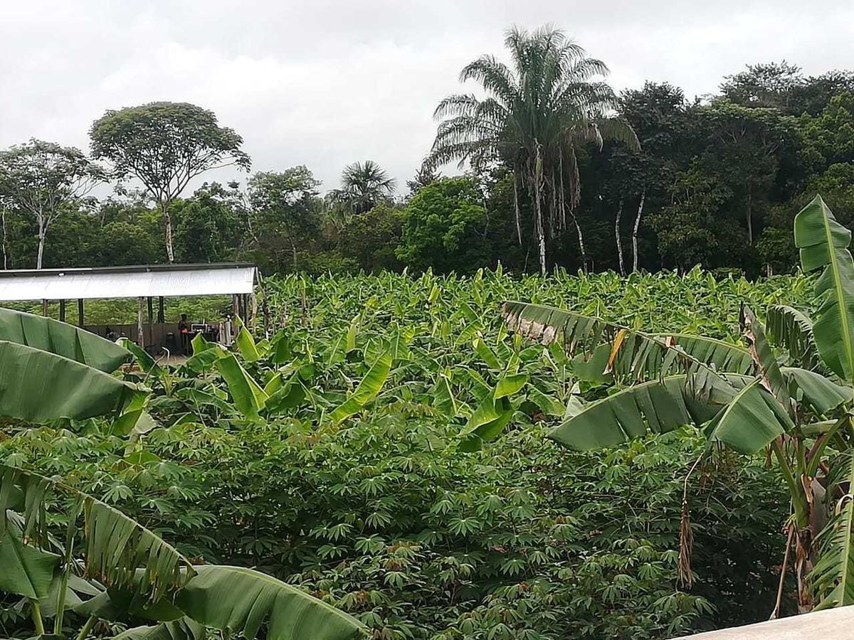 granja piscicola, porcicola y agricola