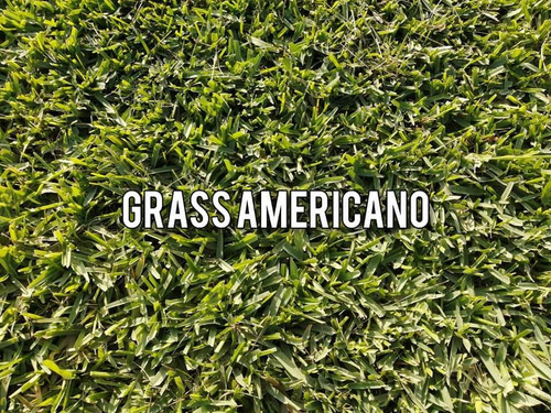 grass huachipa norte
