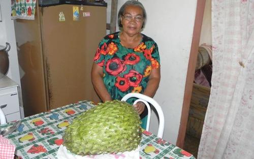 graviola gigante até 15 kg morata morada sementes para mudas