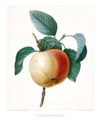 gravura de fruta