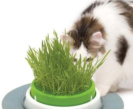 greenland hierba para gatos y perros x 100g combo x 2