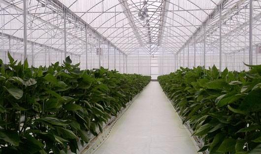 Ground cover malla antimaleza invernadero vivero 4 x 100 for Vivero e invernadero