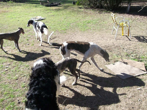 guarderia caneka - club canino