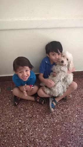 guarderia canina, baños y peluqueria, traslados