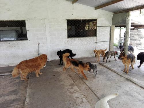 guarderia canina cachorro barniz