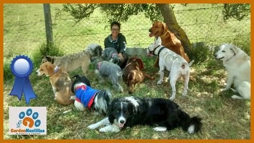 guarderia canina campestre bogota