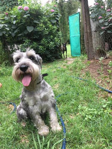 guarderia  canina   club canino caneka