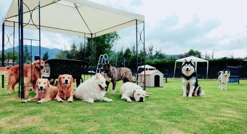 guardería canina colegio canino y adiestramiento