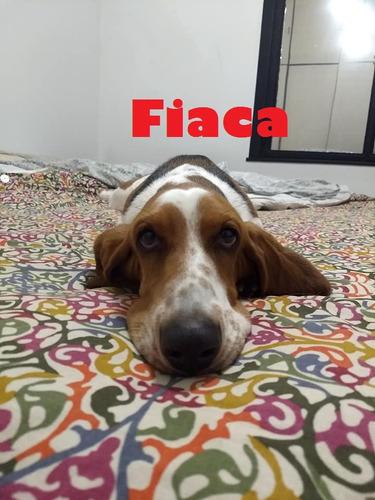 guardería canina como en casa - más de 50 recomendaciones